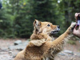 CBD Öl Erfahrungen bei Hunden