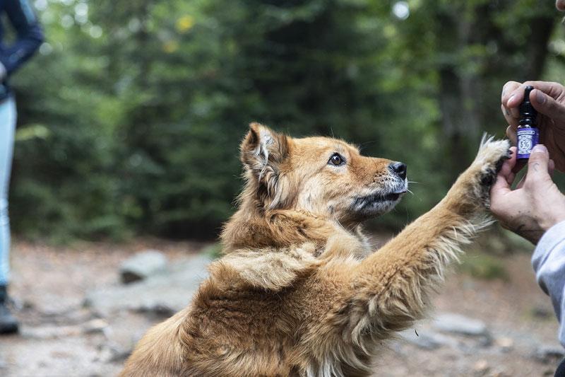 CBD bei Hunden Erfahrungsberichte von HANFGÖTTIN