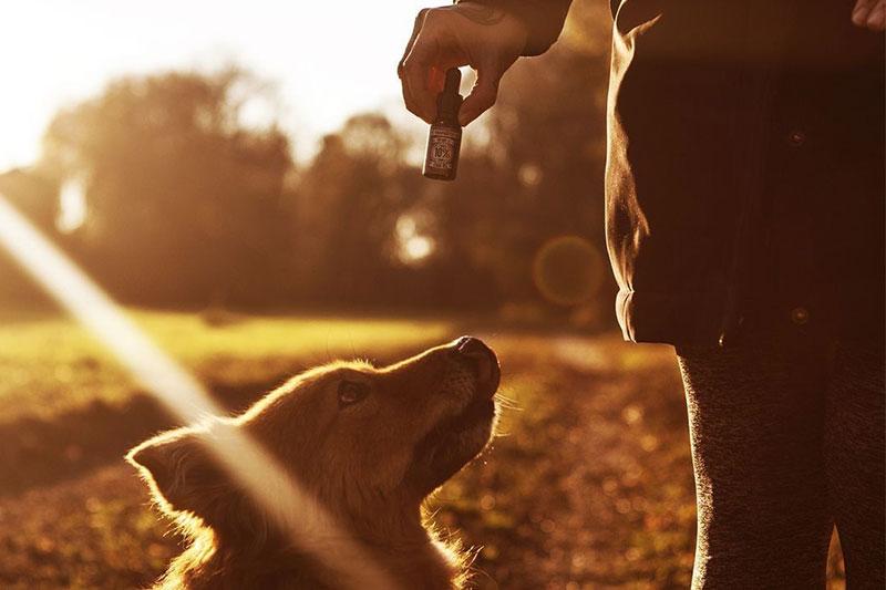 Cannabidiol als Behandlung für Haustiere Hunde Katzen - HANFGÖTTIN CBD aus München