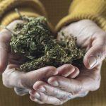 Die Inhaltsstoffe von CBD Hanföl – Cannabis als Powerpaket?